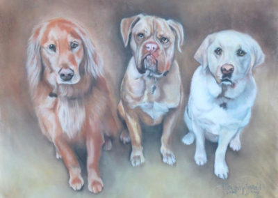 Three Doggie Portrait