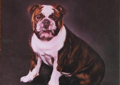 Bulldog on Oil