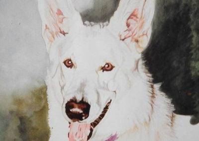 White Shepherd